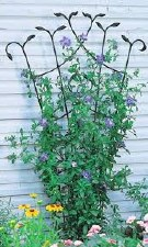 Trellis, Fan with Leaves 80""