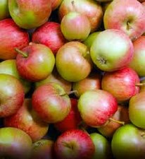 Apple, Winesap, 10g