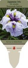 Iris, Greywoods Catrina, J, 1g