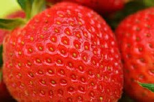 Strawberry, All-Star, 1 gal