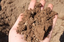 Top Soil, Bulk, per cyd.