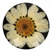 Button Daisy 21.25mm