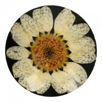 Button Daisy 30mm