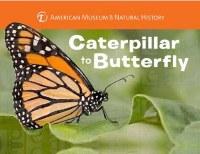 Caterpillar to Butterfly