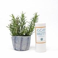 DRY dog shampoo Rosemary, Lave