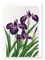 Ezen  Purple Iris