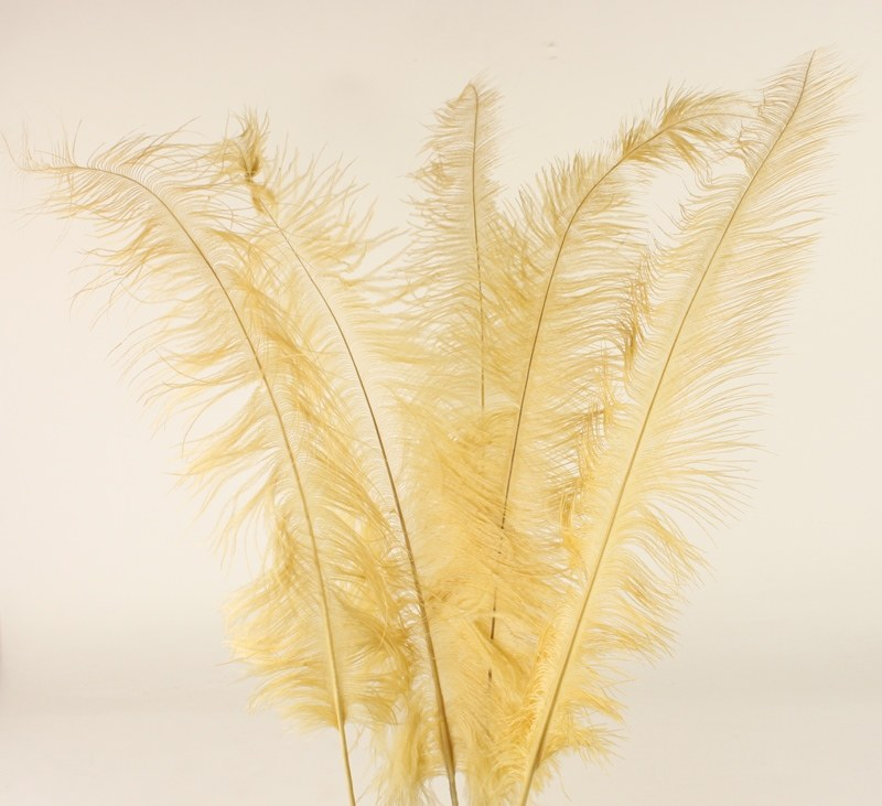 Gold Ostrich Feathers x 5pcs