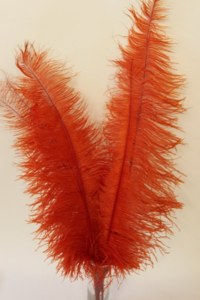 Packet of 5 red ostrich feathers