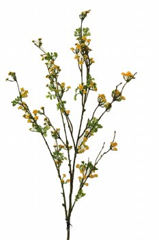 Natural yellow mini blossom flower stem, height-97.5