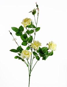 light yellow rose stem x 4 roses
