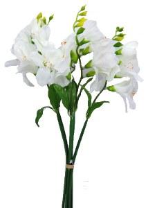 Cream freesia bundle x 5 stems 35cm