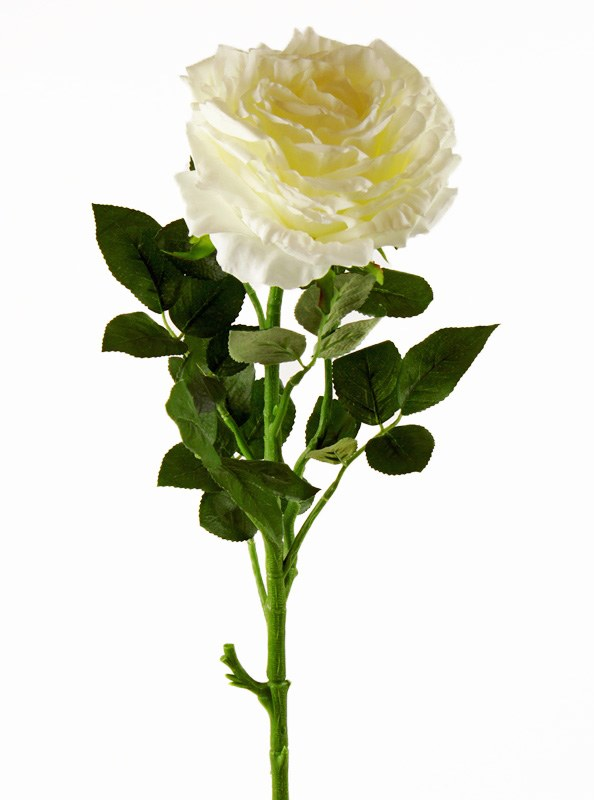Artificial Rose Single Long Stem - 65cm - Ivory
