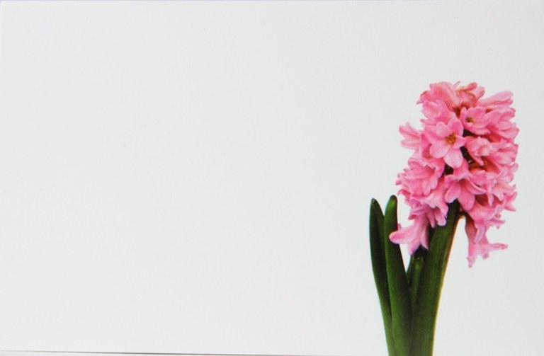 Florist Cards Small Pink Hyacinth x 50pcs