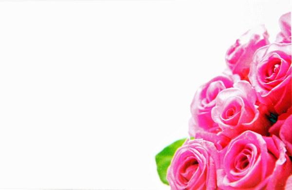 Florist Cards Small Pink Rose x 50pcs