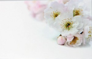 Florist Cards Small Pink/White x 50pcs