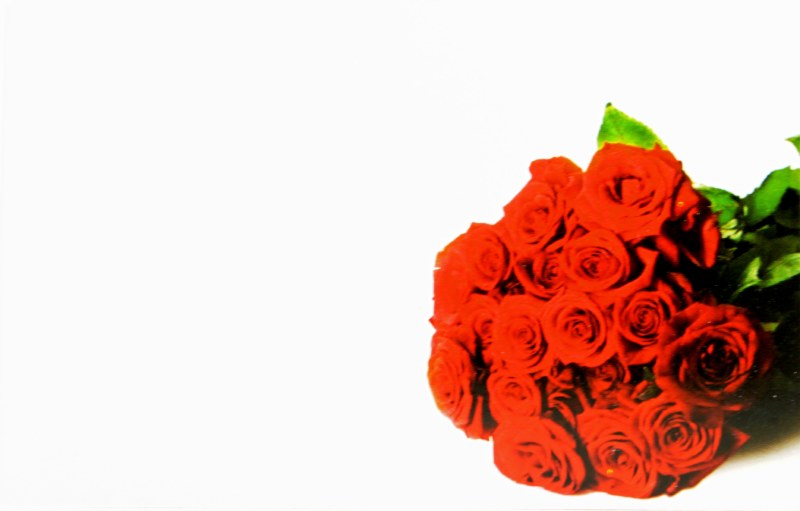 Florist Cards Small Red Rose x 50pcs