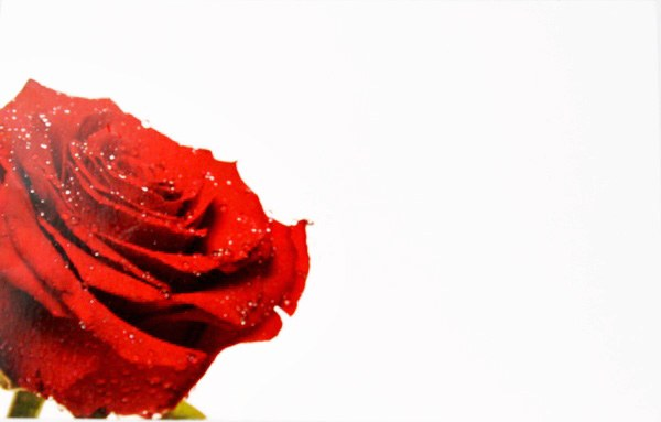 Florist Crads Small Rose x 50pcs