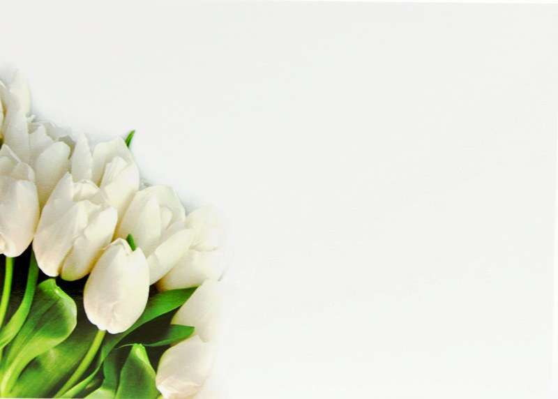 Florist Gift Cards Large White Tulip x 9pcs