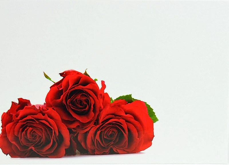 Florist Gift Cards Blank x 9pcs