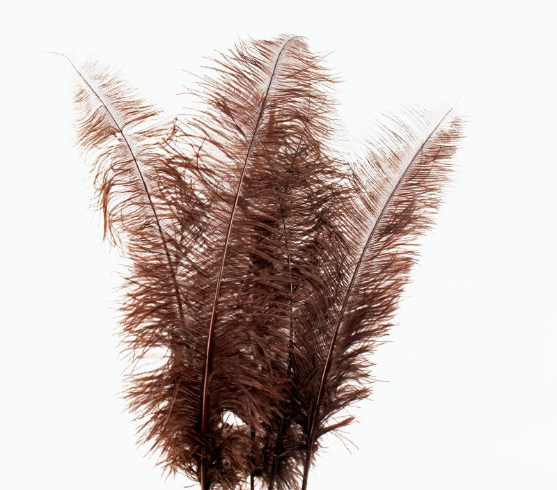 Ostrich Feathers Brown x 5pcs