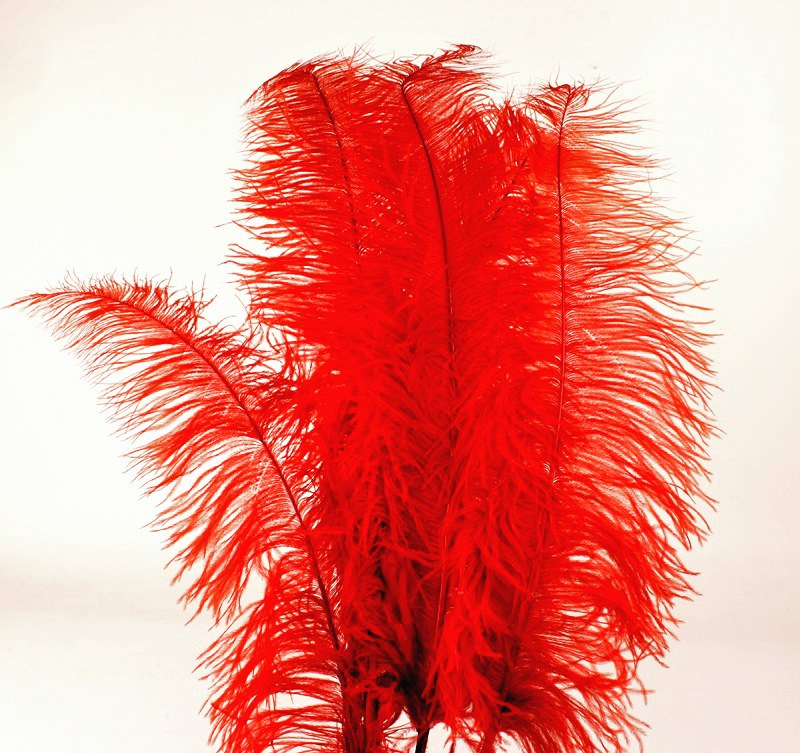 Ostrich Feathers Red x 5 pcs