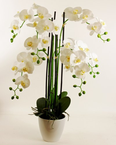 Artificial Orchid Arrangement X 6 Stems 113cm Www Floralsundries Com Trevor Green Floral Sundries