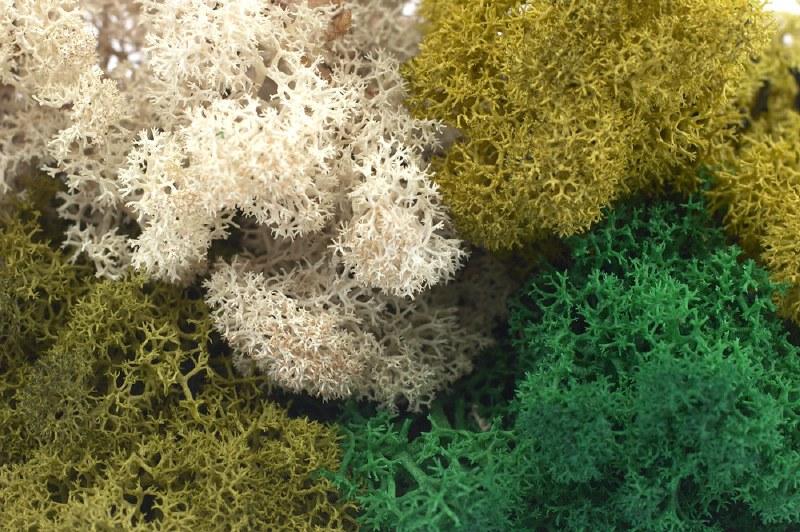Finland moss natural 500grams