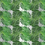 Florist Cellophane Wrap 80cm x 50m Cheese Plant