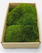 Pull Moss Natural 500G