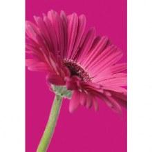 Florist Folded Gift Card x 25pcs 10cm x 7cm