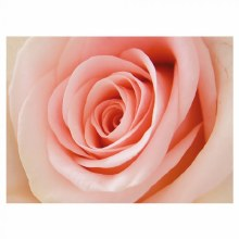 Folding Florist Cards Pink Rose x 25pcs
