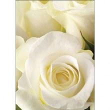 Florist Folded Gift Crad Ivory Rose x 25pcs 10cm x 7cm