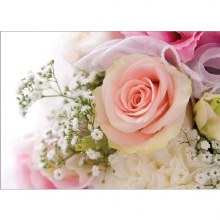 Folded Florist Gift Card Rose & Gyp x 25pcs 10cm x 7cm