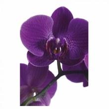 Florist Folding Cards Purple Orchid x 25