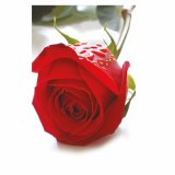 Folding Florist Cards Red Rose x 25pcs