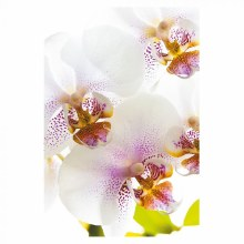 Folded Florist Gift Cards Orchid x 25