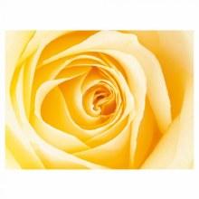 Folded Florist Cards Cream x 25pcs