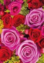 Florist Folding Cards Roses x 25