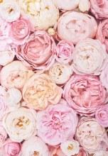 Florist Folding Gift Cards Peonies x 25