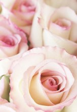 Florist Folding Gift Cards Pink x 25