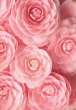 Florist Folding Cards Pink x 25