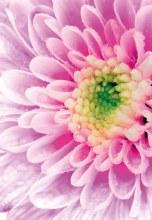 Florist Folding Cards Lilac x 25