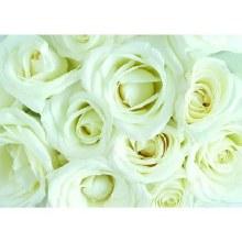 Folded Florist Gift Cards- White Rose x 25pcs 10cm x 7cm