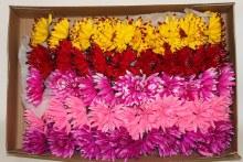 100 xSpiked Dahlia Christmas florist pick