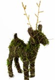 Christmas Wicker Reindeer W Moss 60cm