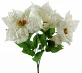 White Velvet Poinsettia bunch x 5