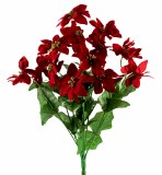 Red and gold poinsettia bunch x 8
