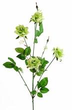 Green rose stem x 4 roses