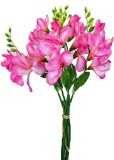 Pink freesia bundle x 5 stems 35cm