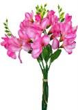 Pink freesia bundle x 5 stems 35cm